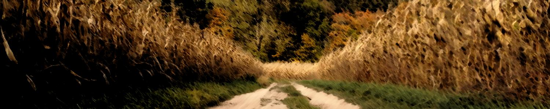 Man sieht einen Feldweg, der zwischen den mehreren Maeisfeldern verläuft. Und plötzlich in Mitten des Feldes endet. Das gesamte Bild ist sehr unscharf.